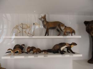 blog-culture-nantes-museum-histoire-naturelle