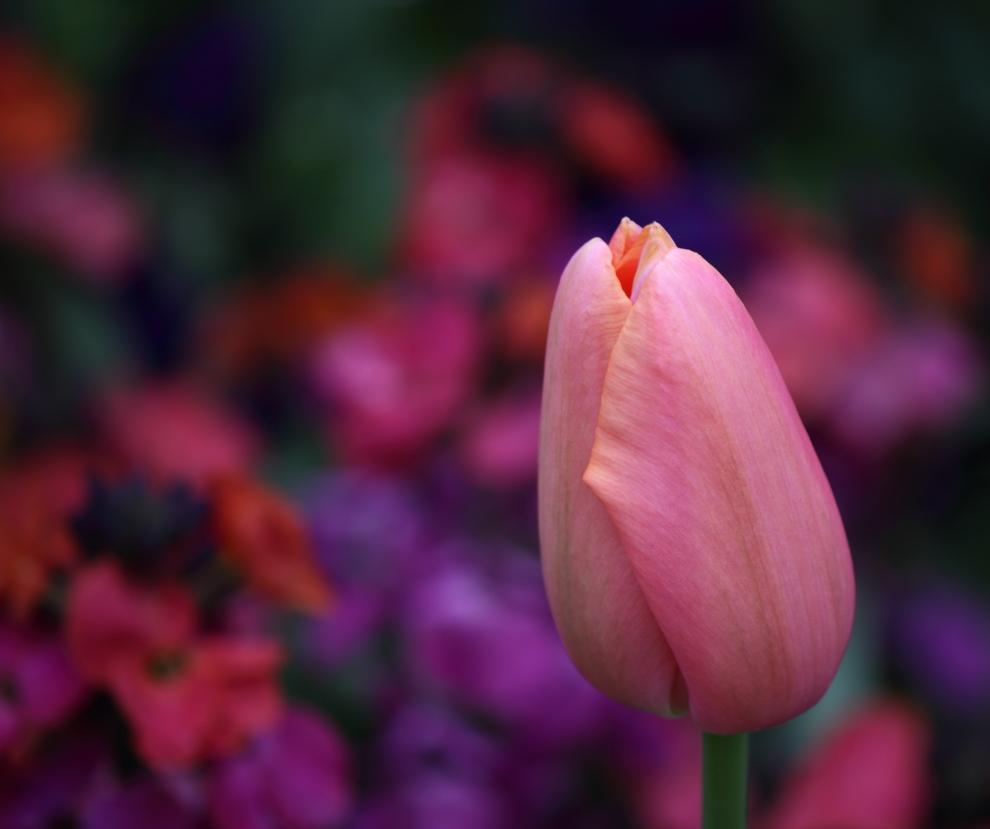 blog-beaute-nantes-taxe-rose