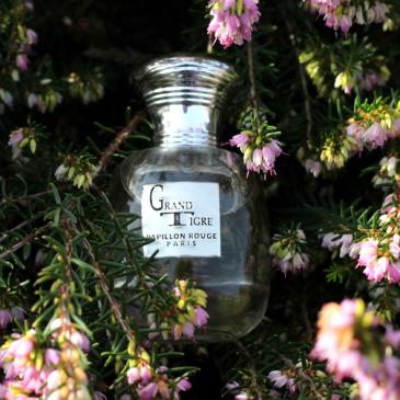 Eau de parfum GRAND TIGRE – Papillon rouge