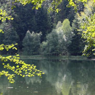 Tourisme : un tour dans le grand Est – Les Vosges