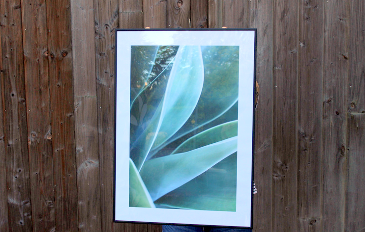 dear sam poster agave