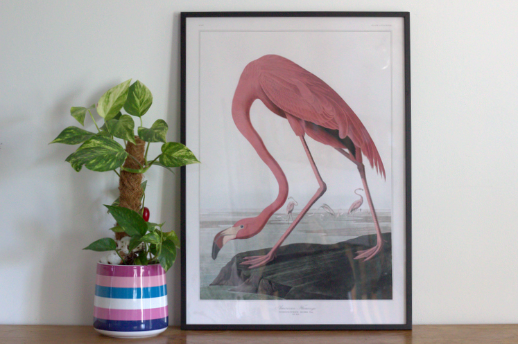 cadre flamant rose Poster store