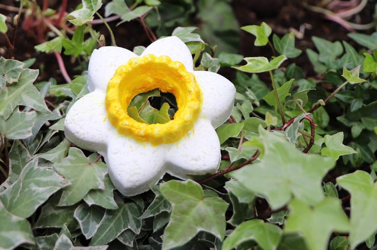 singing daffodil