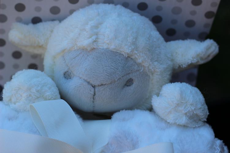 Mon coffret naissance mouton chou